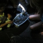Evenings often involve campfires, dance lessons, or game nights. Last year the group was lucky enough to catch the end of sea turle hatching season!