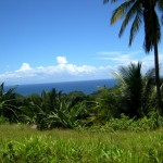 Our small host community is located on the northeastern coast of Dominica.
