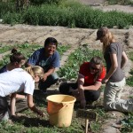 Lend a hand in agricultural and construction projects connected to the school.