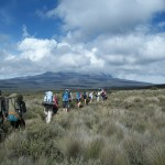 The group crosses the heath and moorlands of the Shira Plateau on the way to an overnight camp.