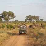 Journey through Tarangire National Park and the Ngorogoro Crater -- world renowned for their abundant and diverse wildlife.