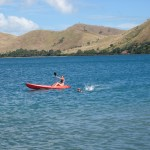 Kayaking and swimming are great ways to explore the ocean and find friendly sea lions and dolphins.  The more time you spend on the water, the better your chances are of finding incredible things…