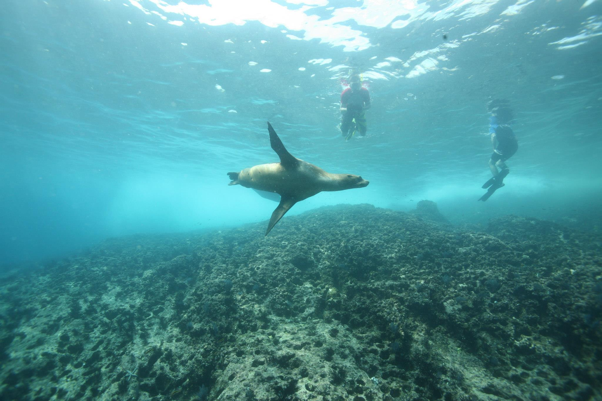 Safely swim with charismatic marine species like seals, sea lions, whales, and dolphins.